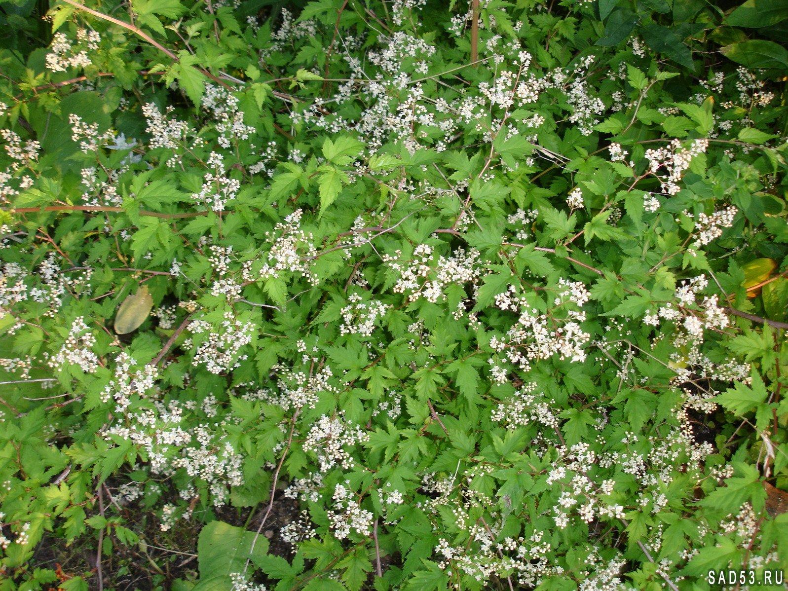 Посев семян клубники на рассаду - видео 30