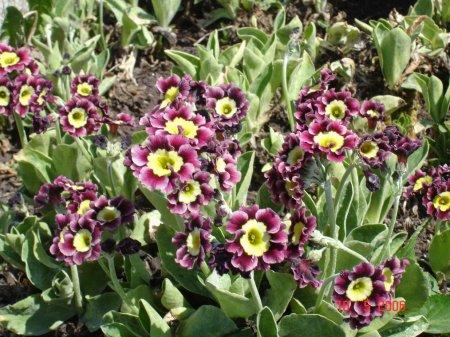 Купить почтой цветы многолетники купить дорогие искусственные цветы для дома